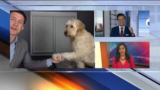 Sports Anchors dog photobombs live shot