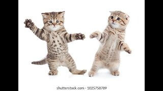 Animal dancing video funniest video