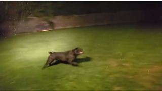 Energetic Dog Loves Running Around In Heavy Storm