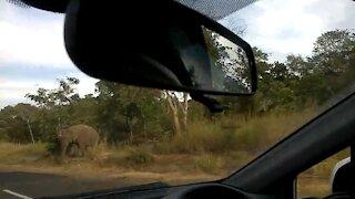 Elephant coming
