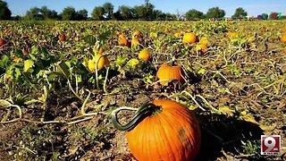Feel the fall at the Marana Pumpkin Patch and Farm Festival