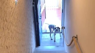 Super smart dog learns how to potty outside on his own