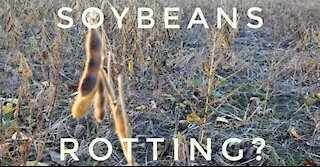 Food Shortage: Rotting Crops?