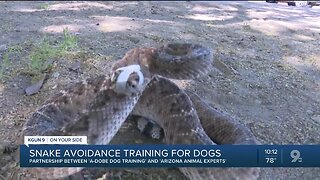 Snake avoidance training for dogs could save your life
