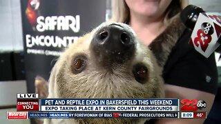 Pet of the Week: Georgie, Pomeranian Mix