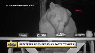 Bears taste-test honey for beekeeper