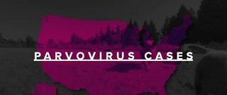 Spike in dog disease parvovirus