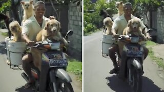 Guy rides a scooter with entire pack of dogs