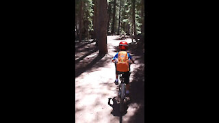 Mountain Bike *