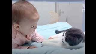 Super cute and adorable cat and baby! Best funny video compilations