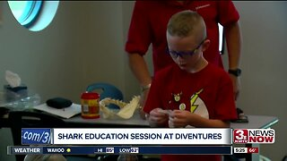 Shark education
