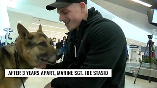 Check This Out: Marine reunited with military working dog