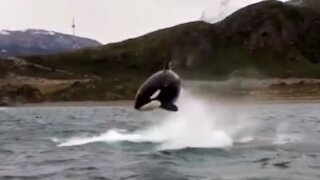 Up-close encounter with Killer Whales caught on camera