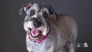Stuart photographer takes pet portraits to raise money for Farm Dog Rescue