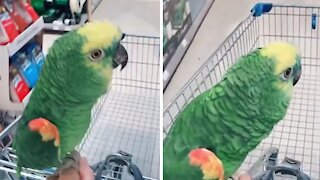 Parrot goes shopping with his owner at the pet store