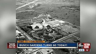 Busch Garden celebrates turning 60