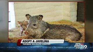 Tucson Wildlife Center rescues sanctuary Javelina