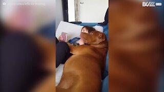 Il tenerissimo momento tra un cane e un bimbo sul divano!