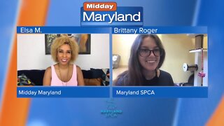Maryland SPCA - Pet Food Assistance