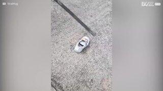 Une fillette trouve un serpent dans sa chaussure