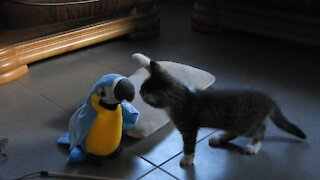 Kitten meets talking toy parrot with adorable results