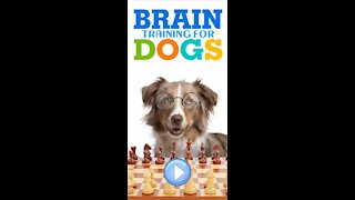 Turn Your Dog into a Genius dog!!