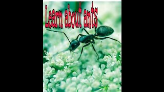 Learn about ants