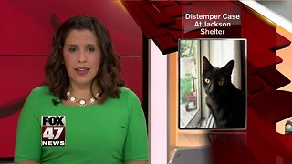 No cats in or out of Jackson Co. Animal Shelter