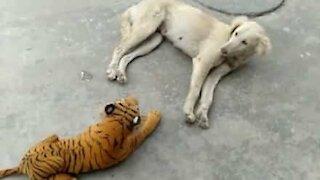 Toy tiger frightens sleepy dog
