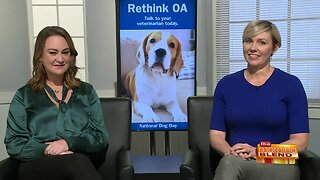 Addressing a Common Disease Affecting Dogs
