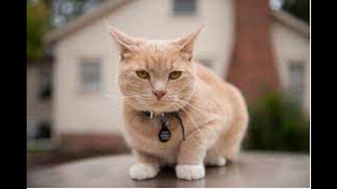 Cat Sweet Voice Ringtone 2021 Kitten voice 2021