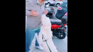 Dog reunited with neighbor after coronavirus sickness
