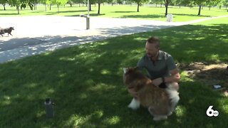 How to keep your pup safe as Treasure Valley temperatures increase