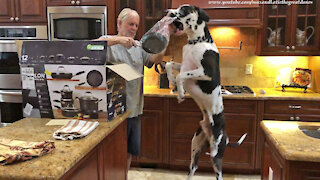 Bouncing Great Dane Is So Excited To See New Pots And Pans