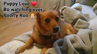 Puppy Love 🐶❤