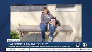 Gemma the dog is up for adoption at the Baltimore Humane Society