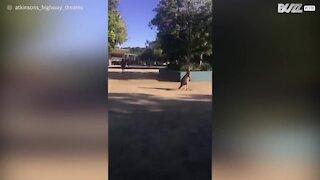 Canguro invade una scuola in Australia