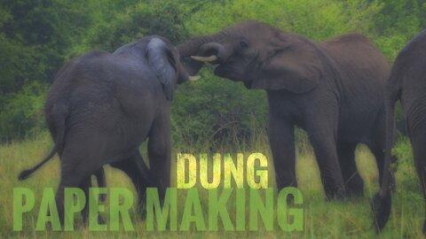 Elephant Dung Recycling - Uganda