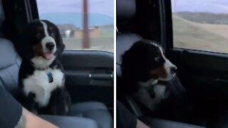 Precious little puppy is afraid of bridges during car ride