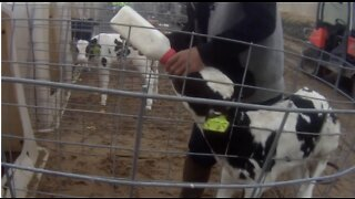 """UPDATE: Farm owner apologizes for alleged animal cruelty, takes """"full responsibility"""""""