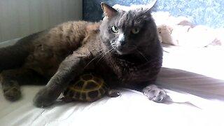 Pet turtle cuddles with kitty best friend