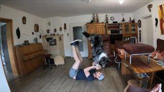 Australian Shepherd performs challenging trick combination