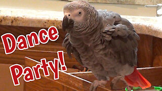 Talented parrot dances better than most people