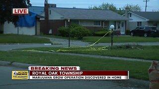 Marijuana grow operation discovered in Royal Oak Township home