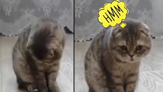 Watch the exact moment that cat does shit.