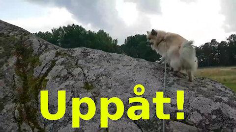 Uppåt-rörelsen