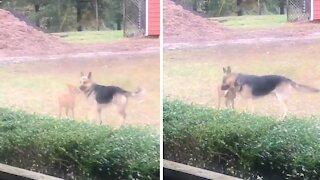 Playful dog literally hugs deer best friend