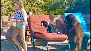 Girl's adorable pups follow her wherever she goes