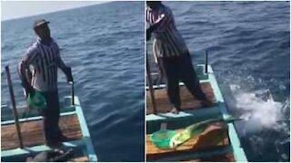 Fiskere mater ville delfiner i Libanon