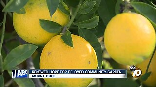 Renewed hope for beloved southeastern San Diego community garden